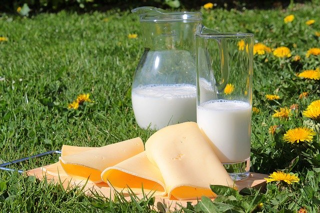 A glass of milk with cheese on green grass, a type of five food group