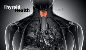 Thyroid health - the often overlooked gland , Sunstate Family Practice
